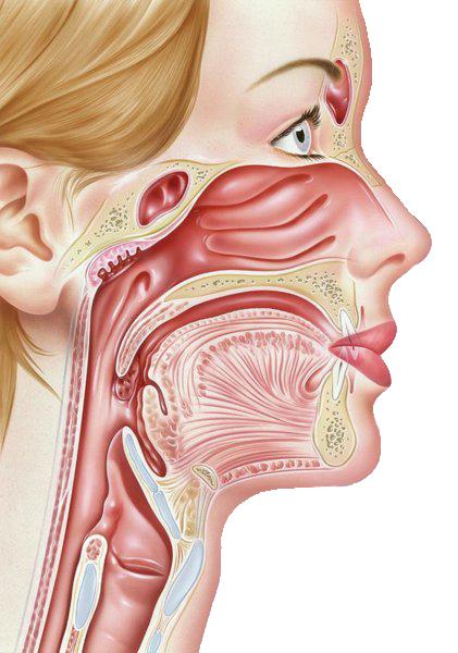 Throat-diseases